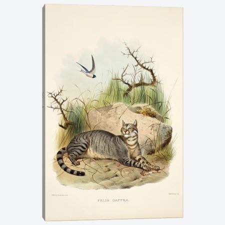 A Monograph Of The Felidae, Or Family Of The Cats By Daniel Giraund XII Canvas Print #NHM14} by Natural History Museum (UK) Canvas Art