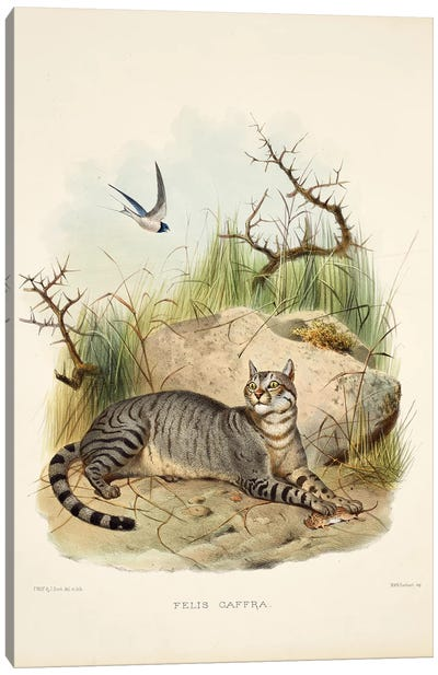A Monograph Of The Felidae, Or Family Of The Cats By Daniel Giraund XII Canvas Art Print