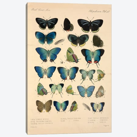 Butterflies, Illustration From Entomology Library At The Natural History Museum, London Canvas Print #NHM158} by Natural History Museum (UK) Canvas Print