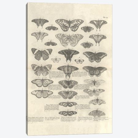 Butterfly Illustration, Table 239 From Natural History Of Jamaica (1725) By Sir Hans Sloane Canvas Print #NHM159} by Natural History Museum (UK) Canvas Art Print