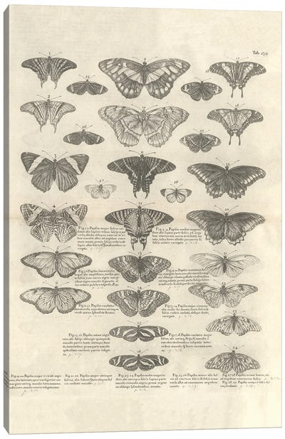 Butterfly Illustration, Table 239 From Natural History Of Jamaica (1725) By Sir Hans Sloane Canvas Art Print