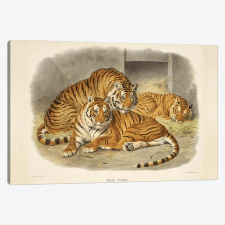 A Monograph Of The Felidae, Or Family Of The Cats By Daniel Giraund XL Canvas Print #NHM16} by Natural History Museum (UK) Canvas Artwork