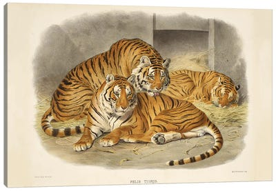 A Monograph Of The Felidae, Or Family Of The Cats By Daniel Giraund XL Canvas Art Print