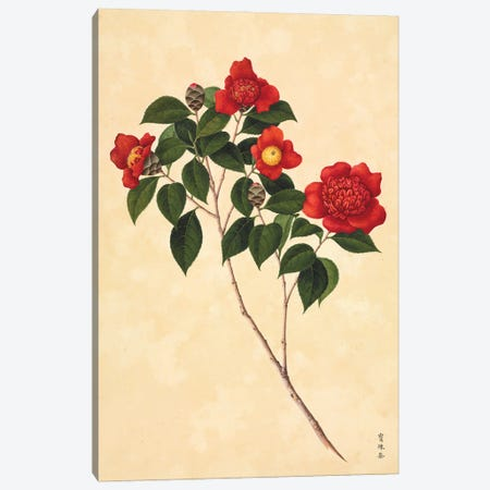 Camellia, Plate 87 From The John Reeves Collection Of Botanical Drawings From Canton, China Canvas Print #NHM170} by Natural History Museum (UK) Canvas Art Print