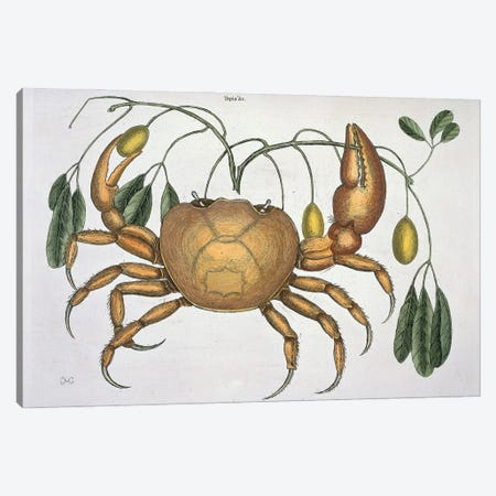 Cancer Terrestris Canvas Print #NHM171} by Natural History Museum (UK) Art Print
