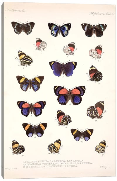 Central American Butterflies, Plate 25 From The Natural History Encyclopedia 'Biologia Centrali-Americana Canvas Art Print