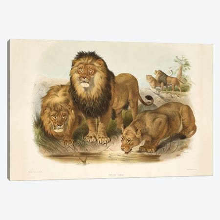 A Monograph Of The Felidae, Or Family Of The Cats By Daniel Giraund XLIII Canvas Print #NHM18} by Natural History Museum (UK) Canvas Art Print