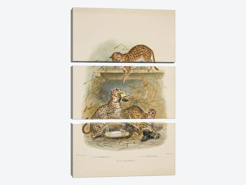 A Monograph Of The Felidae, Or Family Of The Cats By Daniel Giraund XV by Natural History Museum (UK) 3-piece Art Print