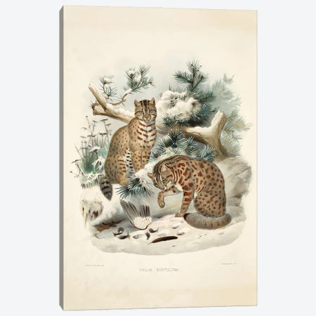 A Monograph Of The Felidae, Or Family Of The Cats By Daniel Giraund XVI Canvas Print #NHM20} by Natural History Museum (UK) Canvas Wall Art
