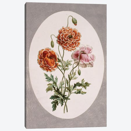 Dwarf Poppy, Folio 58 From A Collection Of Flowers (1795) By John Edwards Canvas Print #NHM230} by Natural History Museum (UK) Canvas Wall Art