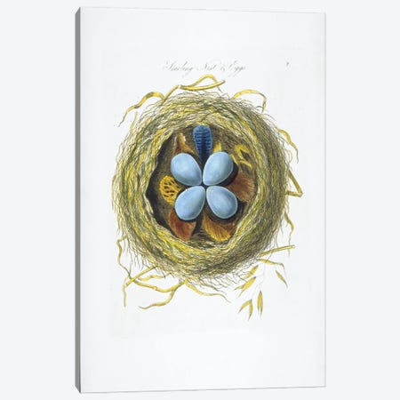 European Starling Nest And Eggs Canvas Print #NHM248} by Natural History Museum (UK) Canvas Print