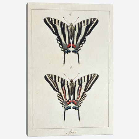 Eurytides Marcellus (Ajax), Swallow Tailed Butterfly Canvas Print #NHM249} by Natural History Museum (UK) Canvas Art Print
