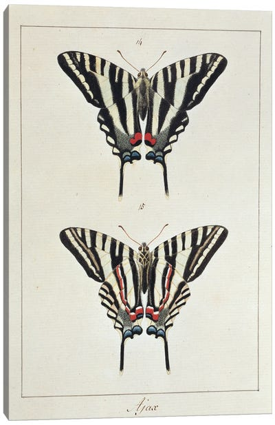 Eurytides Marcellus (Ajax), Swallow Tailed Butterfly Canvas Art Print