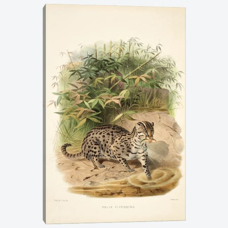 A Monograph Of The Felidae, Or Family Of The Cats By Daniel Giraund XXI Canvas Print #NHM24} by Natural History Museum (UK) Canvas Print