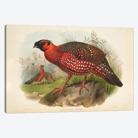 Family Of The Pheasants By Danial Giraud Elliot 1872 Horned Tragopan Canvas Print #NHM255} by Natural History Museum (UK) Canvas Print