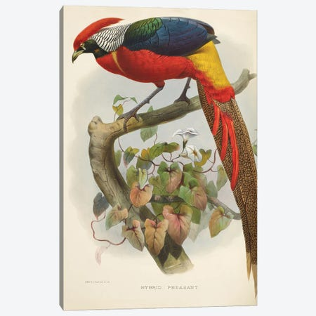 Family Of The Pheasants By Danial Giraud Elliot 1872 Hybrid Pheasant Canvas Print #NHM256} by Natural History Museum (UK) Canvas Print