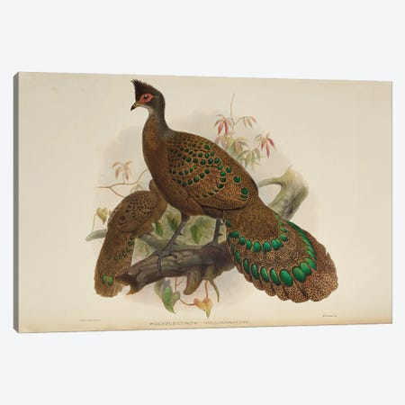 Family Of The Pheasants By Danial Giraud Elliot 1872 Iris Polyplectron Canvas Print #NHM257} by Natural History Museum (UK) Canvas Print