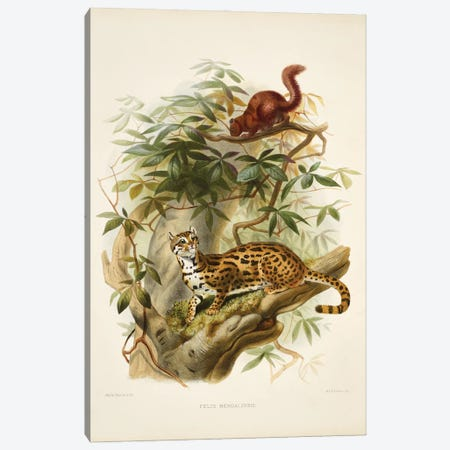 A Monograph Of The Felidae, Or Family Of The Cats By Daniel Giraund XXII Canvas Print #NHM25} by Natural History Museum (UK) Canvas Print