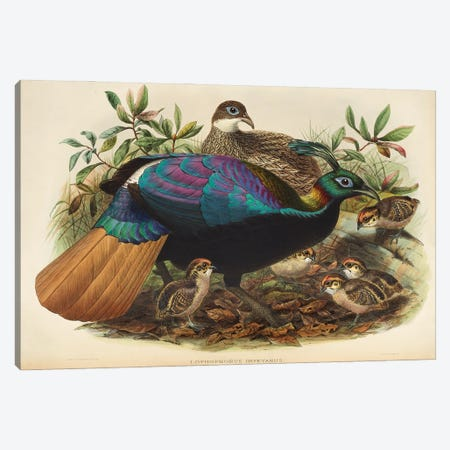 Family Of The Pheasants By Danial Giraud Elliot 1872 Monaul Canvas Print #NHM260} by Natural History Museum (UK) Canvas Print