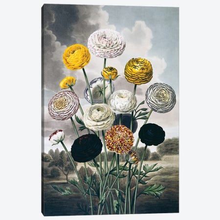 Flora - Lux Florals I Canvas Print #NHM266} by Natural History Museum (UK) Canvas Art