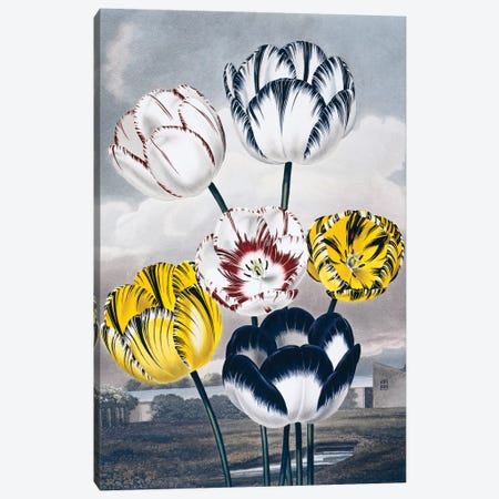 Flora - Lux Florals III Canvas Print #NHM267} by Natural History Museum (UK) Canvas Wall Art