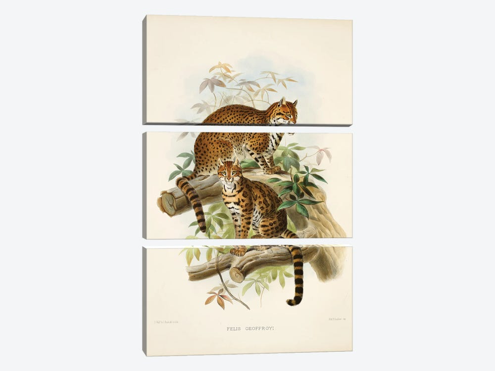 A Monograph Of The Felidae, Or Family Of The Cats By Daniel Giraund XXIII by Natural History Museum (UK) 3-piece Canvas Art Print