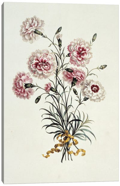 Folio 23 From A Collection Of Flowers By John Edwards Canvas Art Print