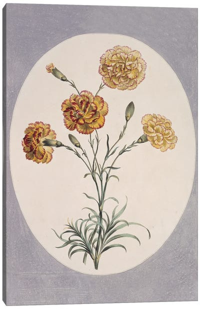 Folio 38 From A Collection Of Flowers By John Edwards Canvas Art Print