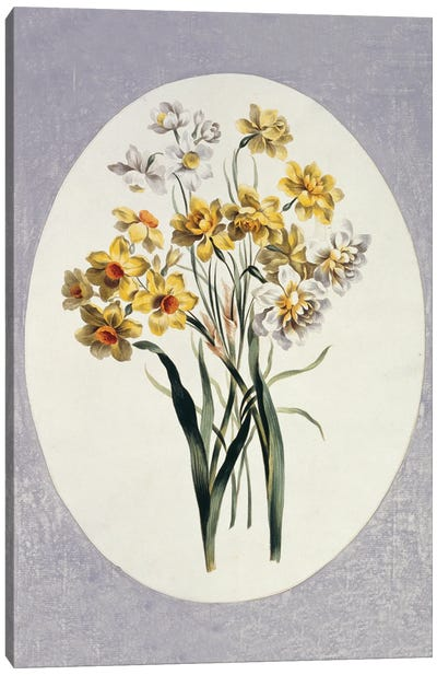 Folio 65 From A Collection Of Flowers By John Edwards Canvas Art Print
