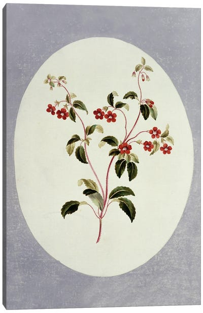Folio 66 From A Collection Of Flowers By John Edwards Canvas Art Print