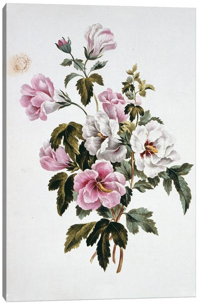 Folio 69 From A Collection Of Flowers By John Edwards Canvas Art Print
