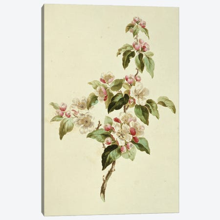 Folio 7 From A Collection Of Flowers By John Edwards Canvas Print #NHM281} by Natural History Museum (UK) Canvas Print