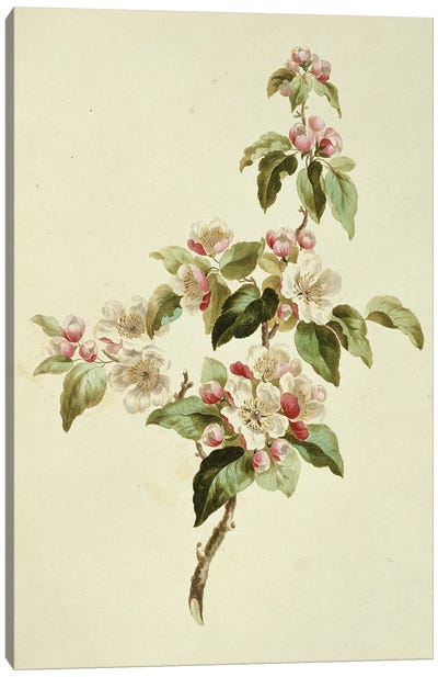 Folio 7 From A Collection Of Flowers By John Edwards Canvas Art Print