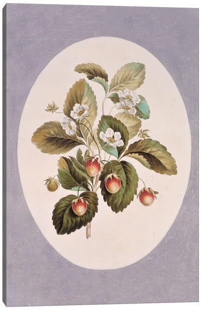 Folio 37 From A Collection Of Flowers By John Edwards Canvas Art Print