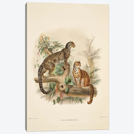 A Monograph Of The Felidae, Or Family Of The Cats By Daniel Giraund XXXIV Canvas Print #NHM28} by Natural History Museum (UK) Canvas Wall Art