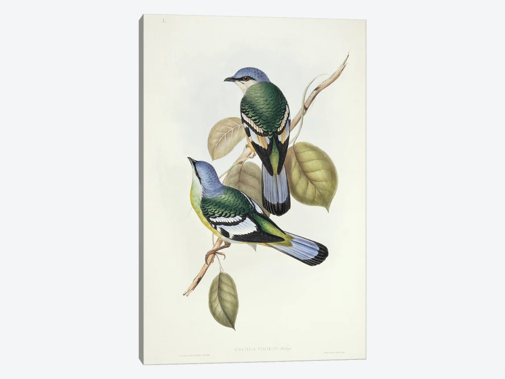 Green Cochoa by Natural History Museum (UK) 1-piece Canvas Artwork