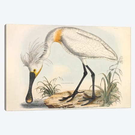 Illustration Of A Eurasian Spoonbill By John Selby Canvas Print #NHM348} by Natural History Museum (UK) Canvas Art