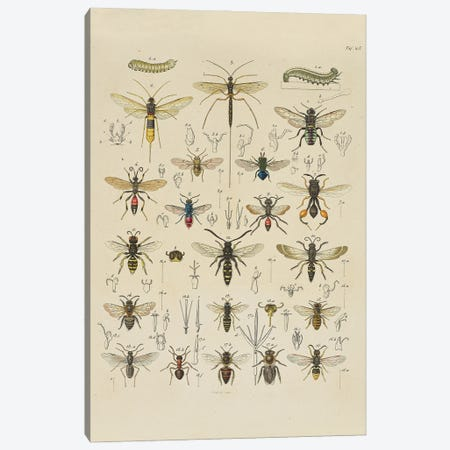 Immen Canvas Print #NHM352} by Natural History Museum (UK) Canvas Print