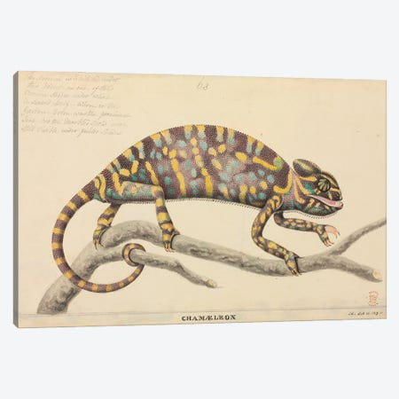 Indian Chameleon. Illustration From The Thomas Hardwicke Collection; Attributed To Artist J. Hayes; 1819 Canvas Print #NHM353} by Natural History Museum (UK) Canvas Print