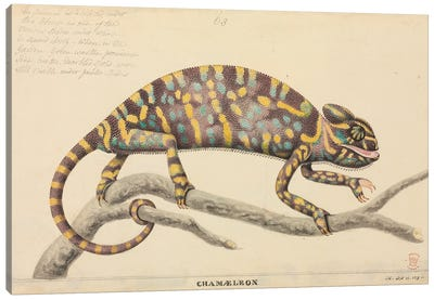 Indian Chameleon. Illustration From The Thomas Hardwicke Collection; Attributed To Artist J. Hayes; 1819 Canvas Art Print