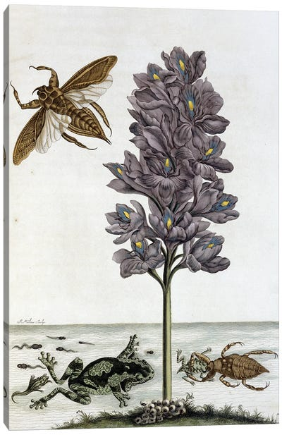 Insects Of Surinam By Maria Sibylla Merian Canvas Art Print