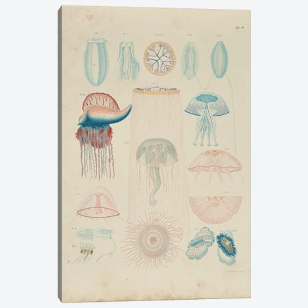 Jellyfish Canvas Print #NHM363} by Natural History Museum (UK) Canvas Art