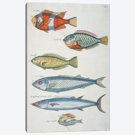 Jourdin, Corbeille, Ican Baby Canvas Print #NHM365} by Natural History Museum (UK) Canvas Print