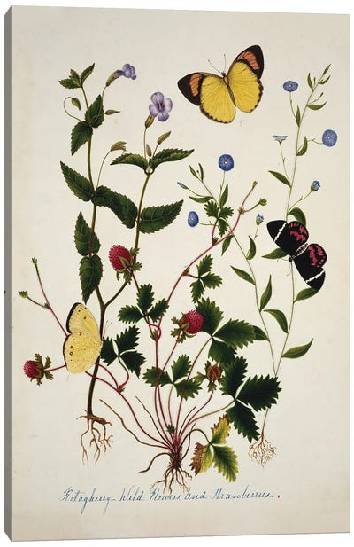 Kotagherry Wild Flowers And Strawberries Canvas Art Print