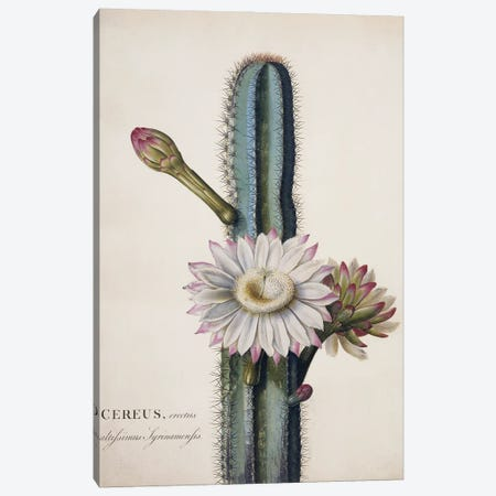 Lady Of The Night Cactus Canvas Print #NHM380} by Natural History Museum (UK) Canvas Artwork