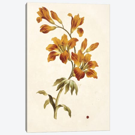 Large Orange Lily, Folio 13 From A Collection Of Flowers (1795) By John Edwards Canvas Print #NHM382} by Natural History Museum (UK) Canvas Artwork