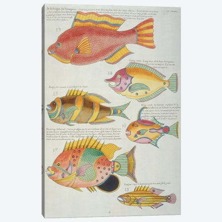 Le Trompeur, Douwing Admiral Canvas Print #NHM383} by Natural History Museum (UK) Canvas Wall Art