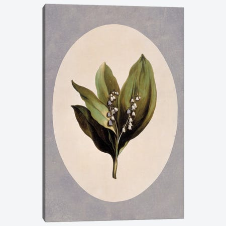 Lily-Of-The-Valley, Folio 28 From A Collection Of Flowers (1795) By John Edwards Canvas Print #NHM388} by Natural History Museum (UK) Canvas Art
