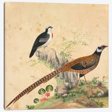 Luzon Bleeding-Heart And Another Unidentifed Pheasant Canvas Print #NHM396} by Natural History Museum (UK) Canvas Art