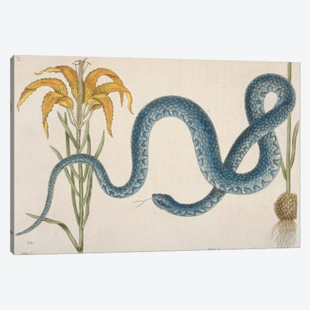 Mud Snake Canvas Print #NHM428} by Natural History Museum (UK) Canvas Print
